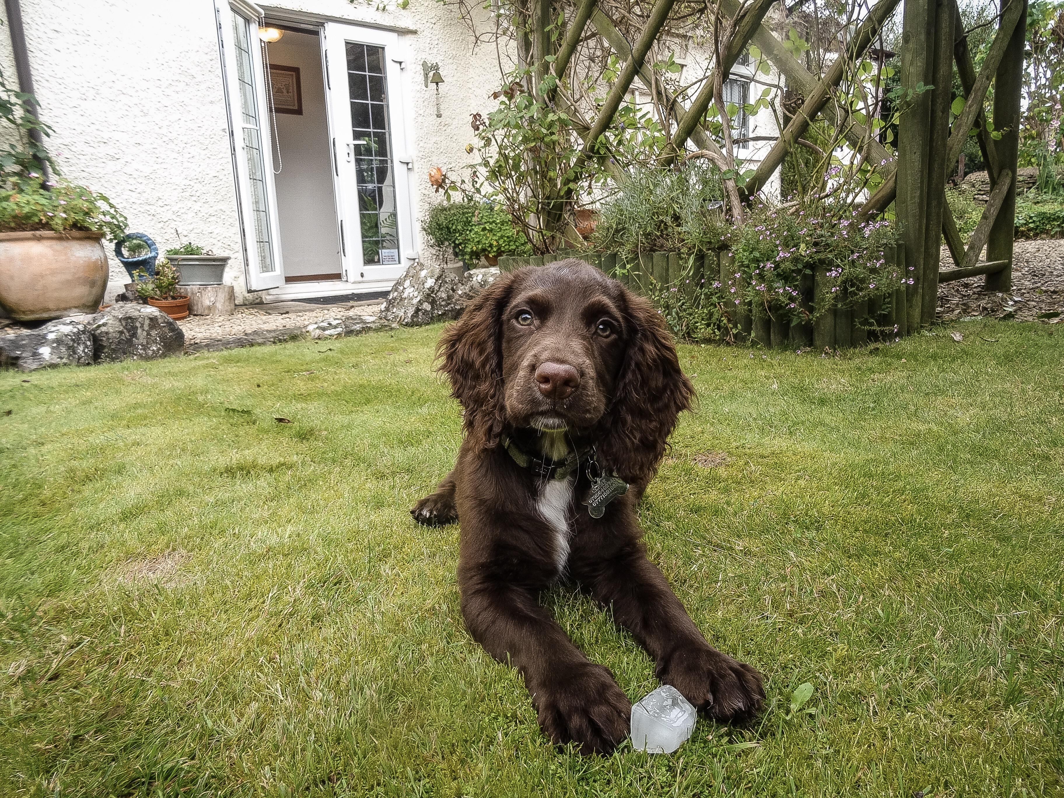 Ways to Help a Teething Puppy – Dapper Maximus