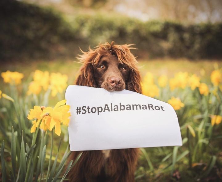 Spreading Awareness: AlabamaRot